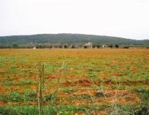 Terreno Urbanizable en Venta en Zona Centre - Santa Eugènia / Santa Eugènia