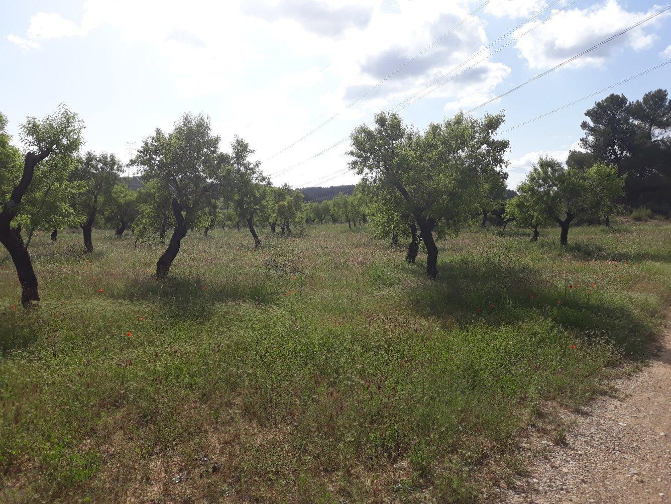 Solar urbà  Garrigues - Vinaixa. En venda peça de terra de secà de 46.849 m2 de superfície al ter