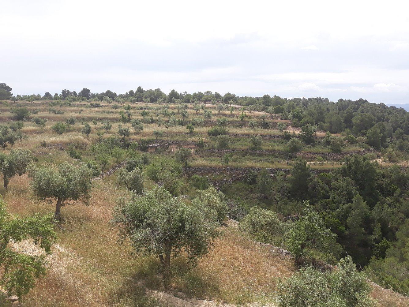 Solar urbà  Garrigues - Vinaixa