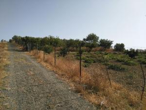 Terreno en Venta en El Alamillo / Lebrija