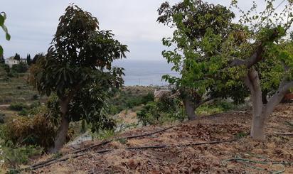 Fincas rústicas de alquiler en Costa Tropical