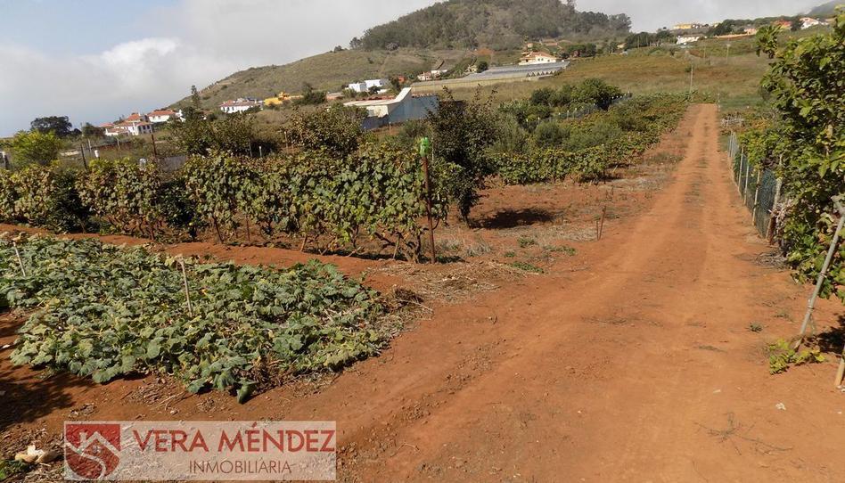 Foto 1 de Finca rústica en venta en Tacoronte - Los Naranjeros, Santa Cruz de Tenerife