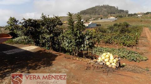 Foto 4 de Finca rústica en venta en Tacoronte - Los Naranjeros, Santa Cruz de Tenerife