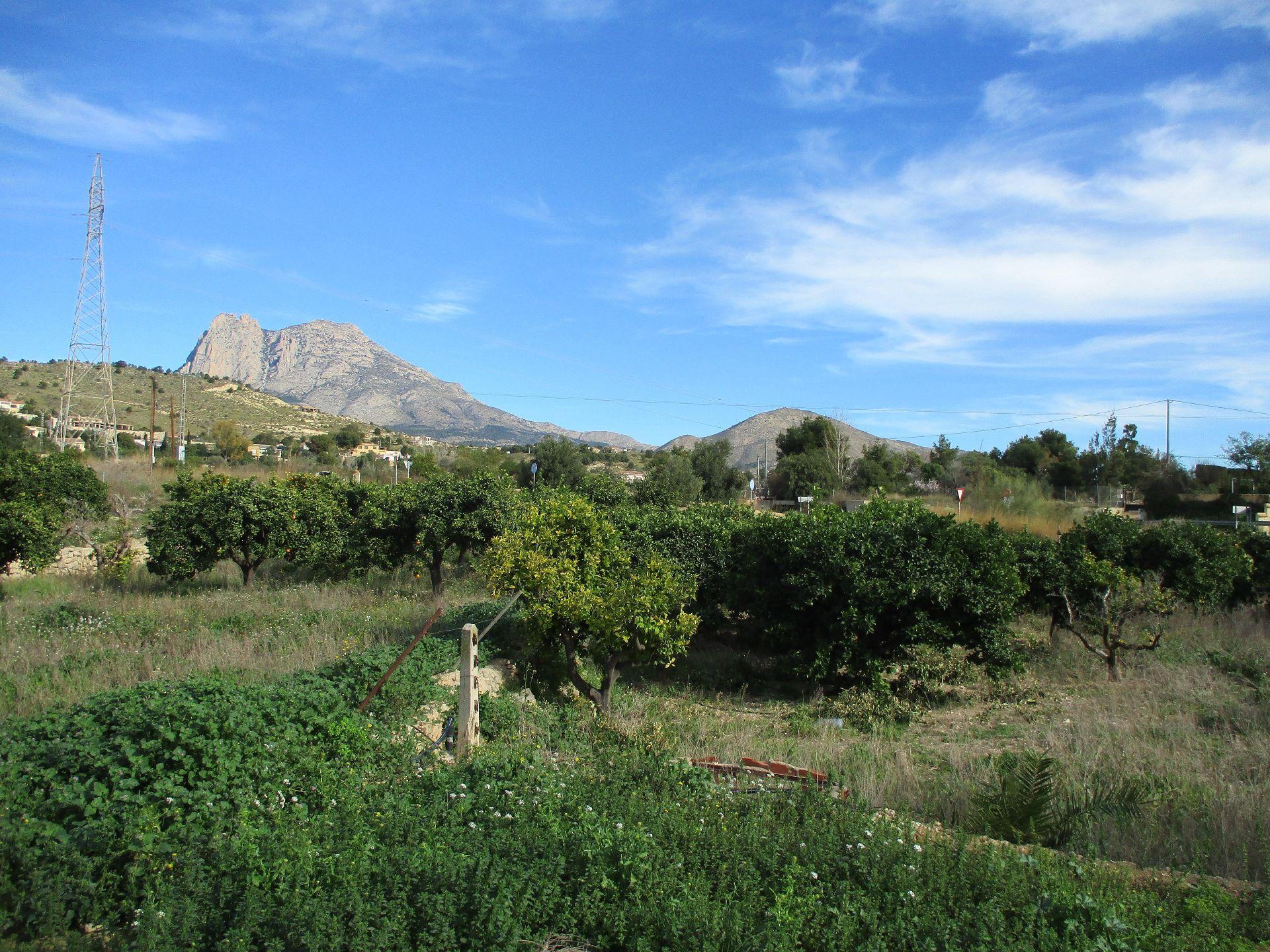 Solar urbà  Aixihuili. Trozo de tierra con balsa de riego y plantación de naranjos.
