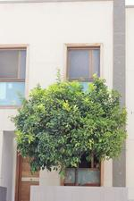 Duplex apartment in Sale in Telde - Telde Centro - San Juan / Telde