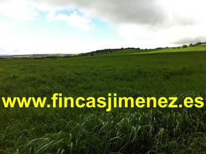 Terreno en Venta en Talavera de la Reina / Casco Antiguo