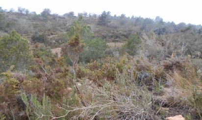 Grundstücke zum verkauf in Ptda San Miguel, Timba y Palillo, Alcalà de Xivert pueblo