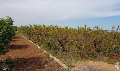 Terreno en venta en Cotes, Algemesí