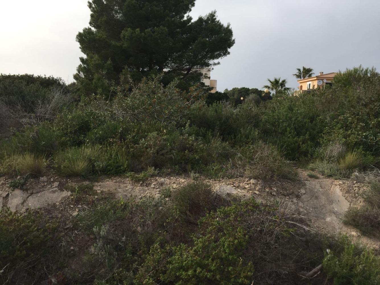 Solar urbano  Can picafort-muro - santa margalida, zona de - santa margalida