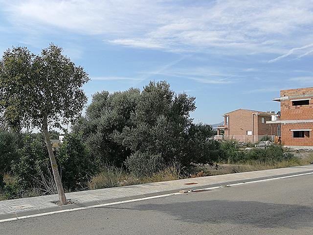 Solar urbano  Alfàbega, urb. els pilans. Oportunidad de solar urbano edificable de 812m² en urb.els pilan