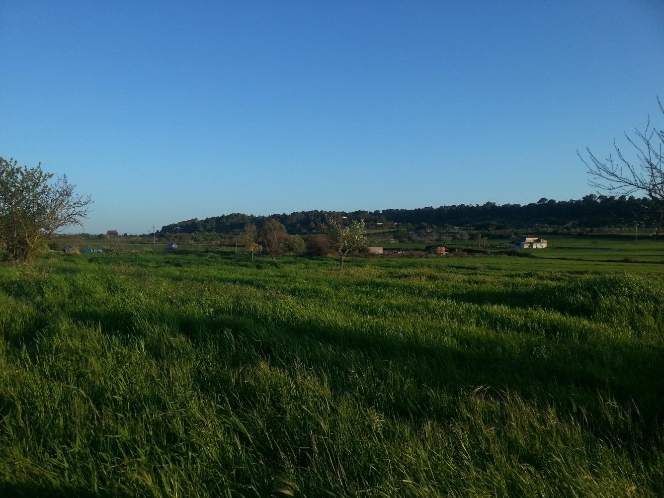 Solar urbano  Zona centre - montuïri. Terreno de 7000m² con pozo, terreno ideal para siembra. muy cerc