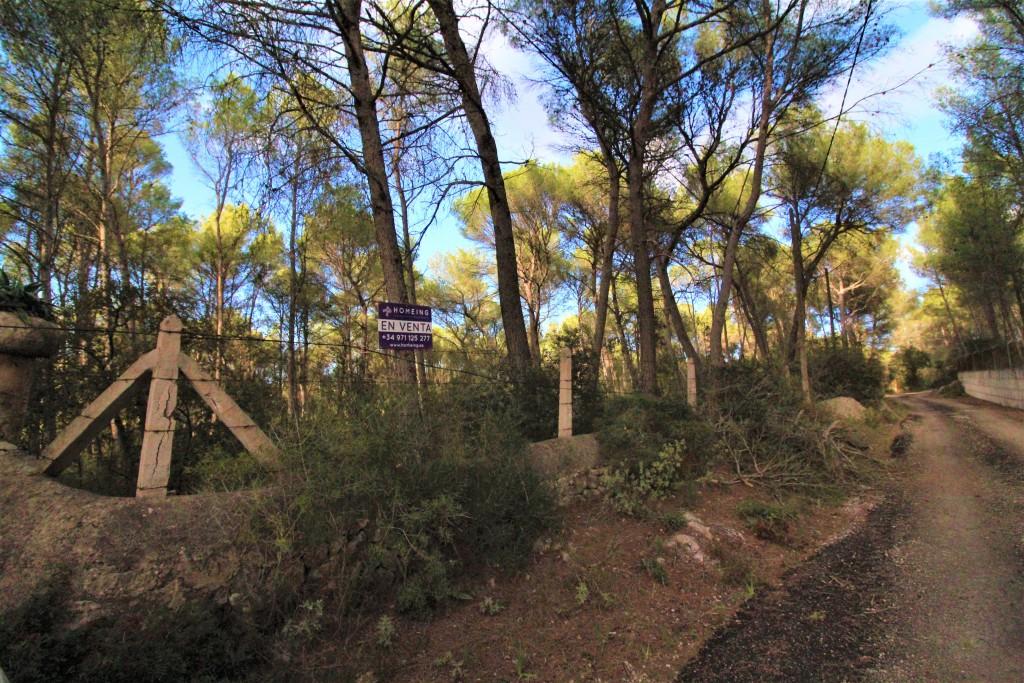 Solar urbano en Algaida. Terreno en venta no urbanizable