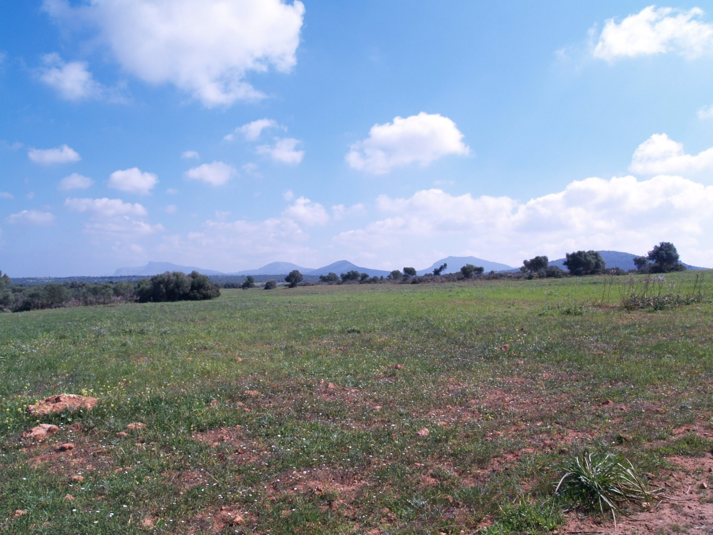 Stadtgrundstück  Santa maria del camí - binissalem, zona de - consell