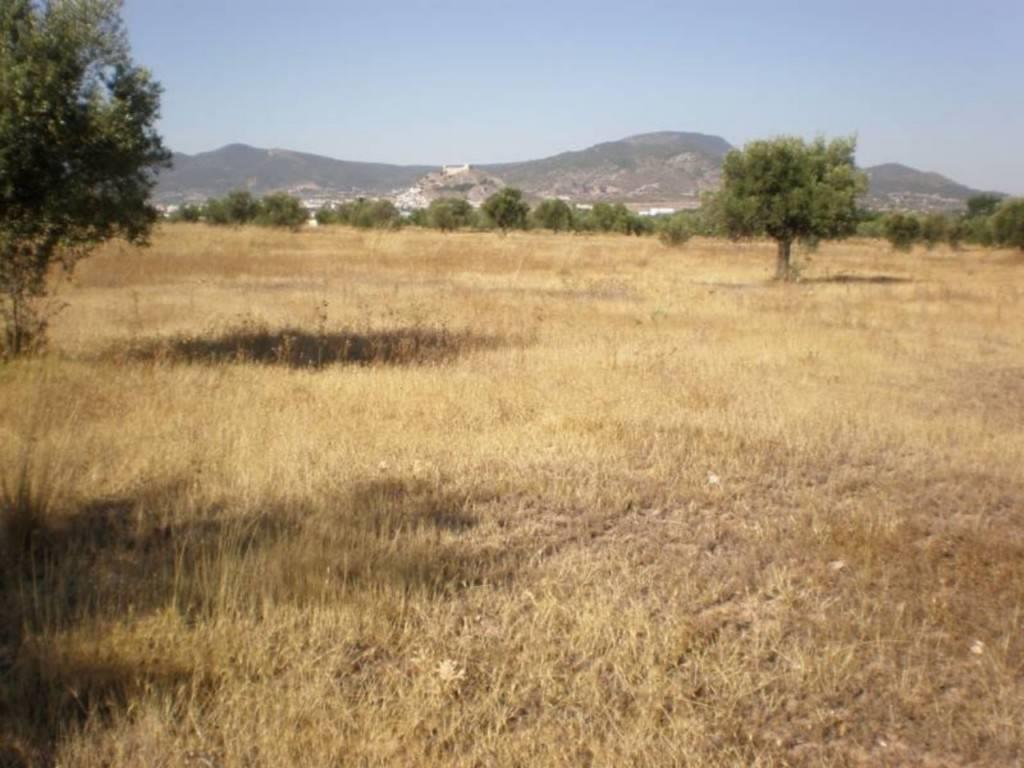 Solar urbano  Part. la hoya - don tomas. Terreno rustico en venta. 10.047 m² solar, cultivable, arbolado,