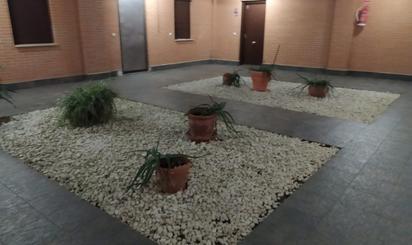 Plantas intermedias en venta baratas en Fuenlabrada
