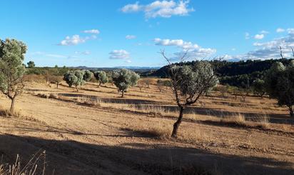 Terreno en venta en Maella
