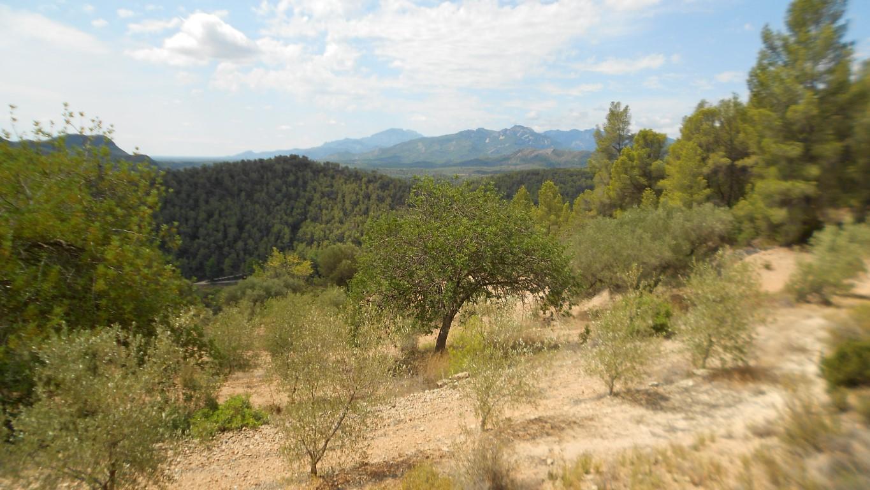 Solar urbano  Tortosa, zona de - xerta. Finca agrícola y forestal de 3,8 hectáreas situada sobre el río