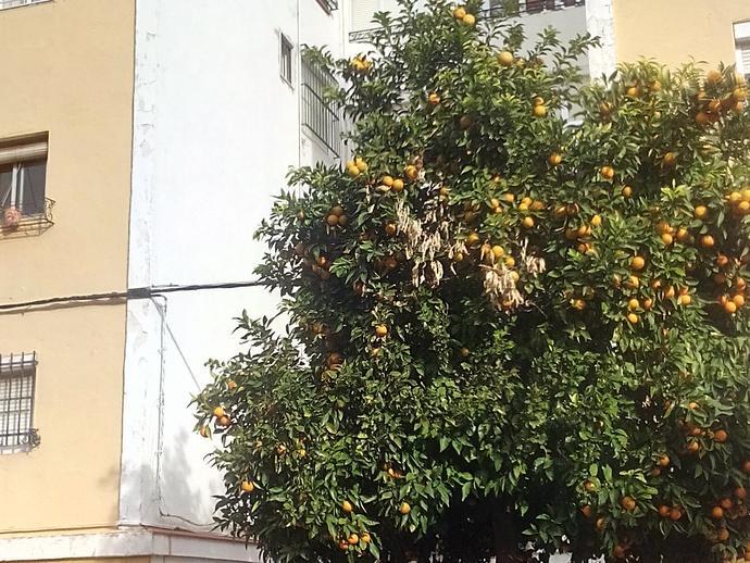 Foto 2 de Piso en Calle Manzana Cruz Roja