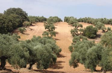 Land for sale in Montilla