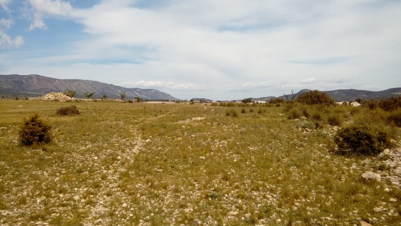 Solar urbà  Monóvar - Pinoso, zona de - el pinós / Pinoso
