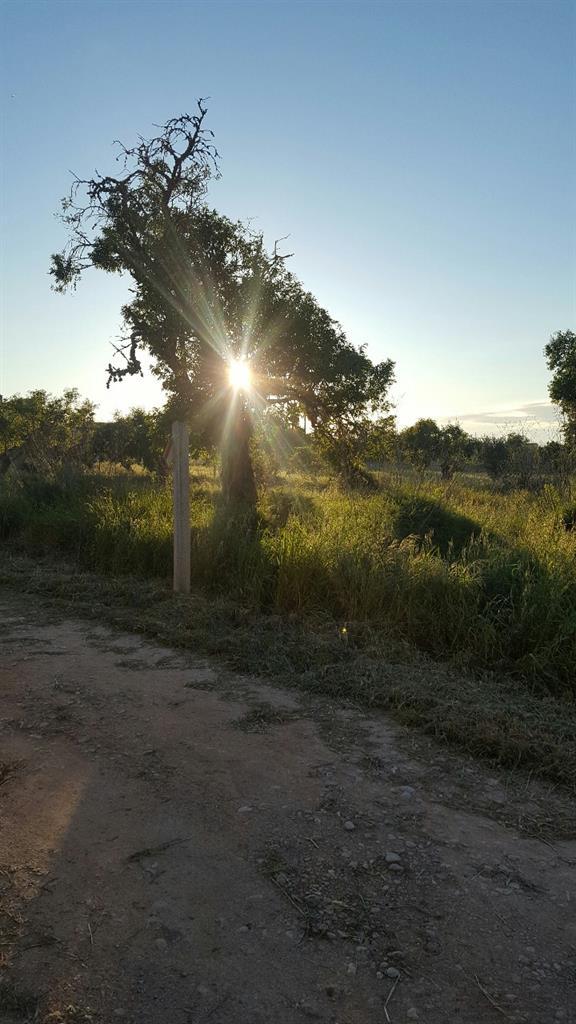 Solar urbà  Algaida