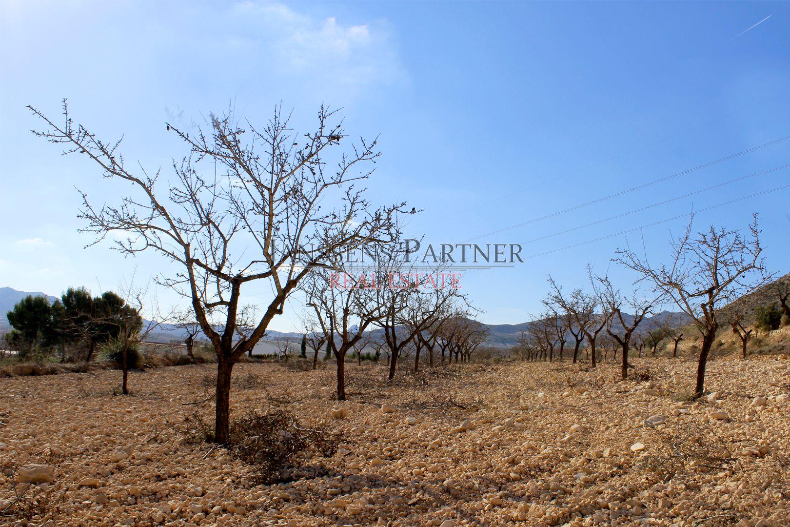 Solar urbà a Hondón de las Nieves. Terreno no urbanizable in Hondón de las Nieves
