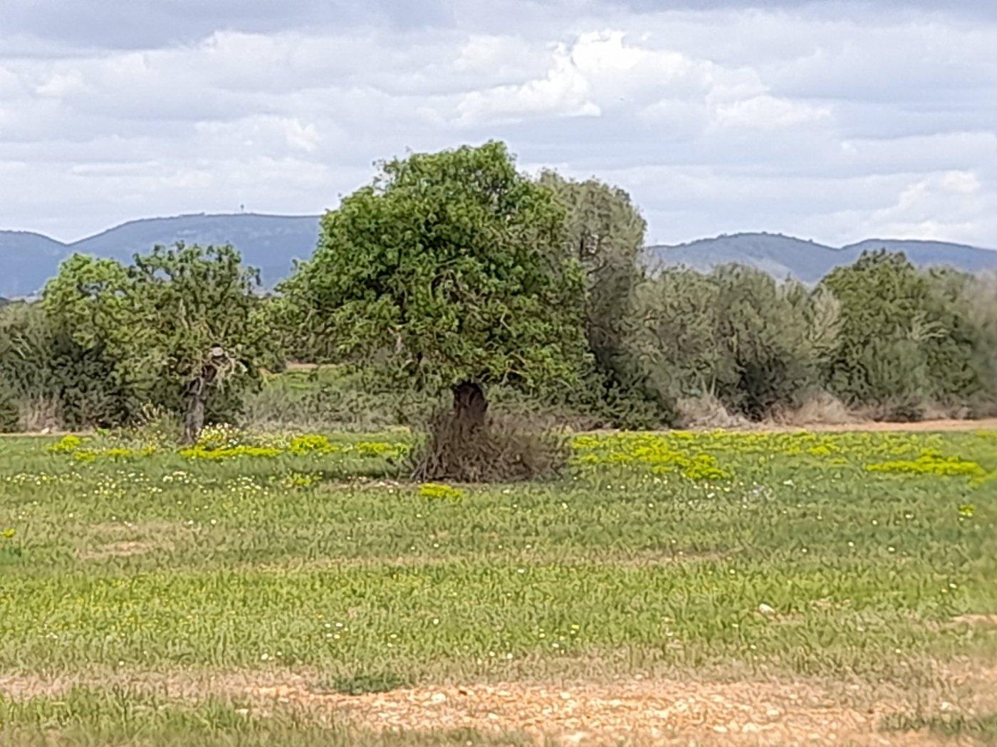 Solar urbà  Campos ,área de campos. Terreno rústico en sa sorda