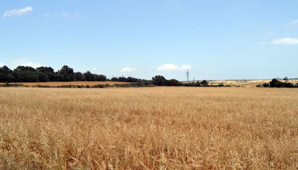 Foto 1 von Grundstücke zum verkauf in Son Afiola, Polígono 2, Parcela 406- Santa Margalida, Illes Balears