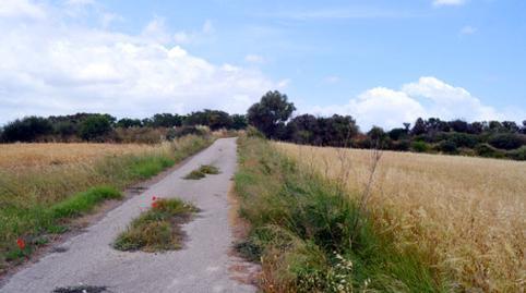 Foto 3 von Grundstücke zum verkauf in Son Afiola, Polígono 2, Parcela 406- Santa Margalida, Illes Balears