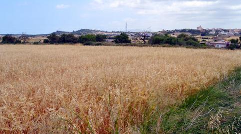 Foto 4 von Grundstücke zum verkauf in Son Afiola, Polígono 2, Parcela 406- Santa Margalida, Illes Balears