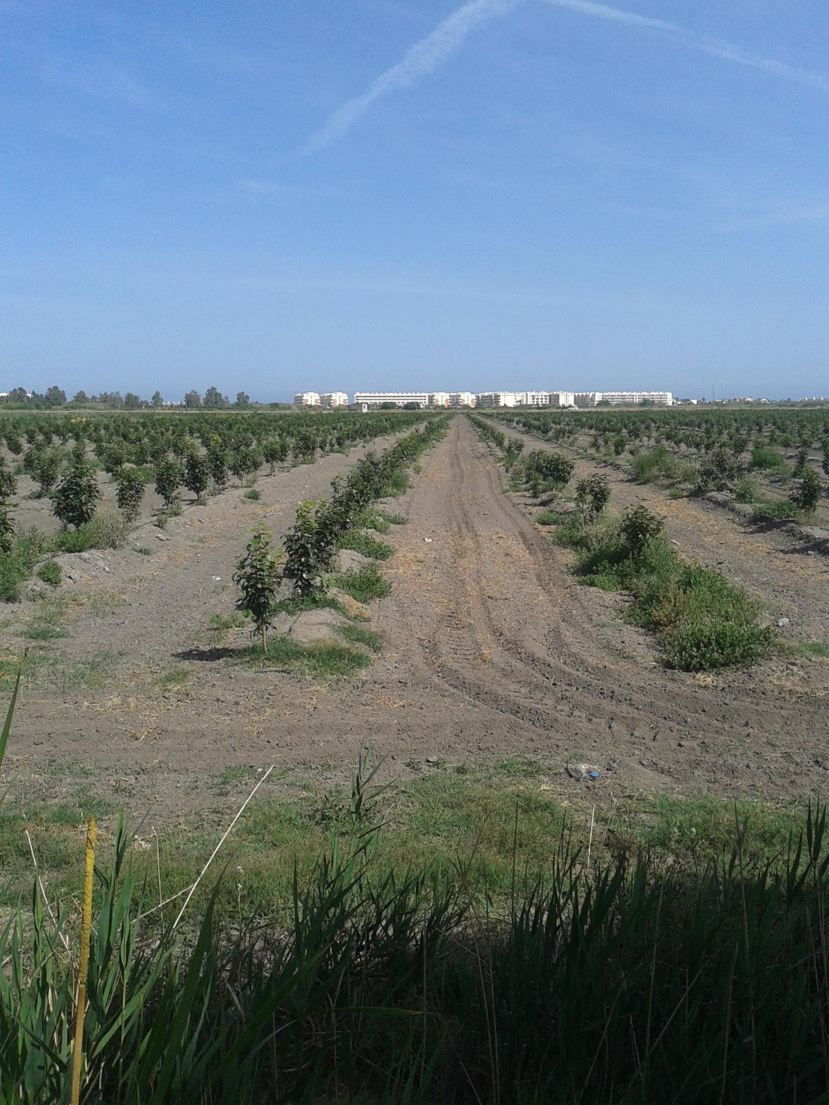 Solar urbano  Almenara, castellón. Finca agrícola de 27 hectáreas ideal para el cultivo de hortícol