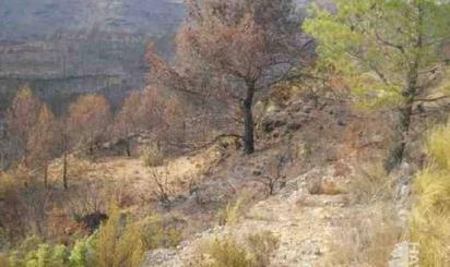 Lands for sale at Alborache