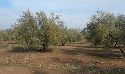 Terrenos en venta en Villanueva del Arzobispo