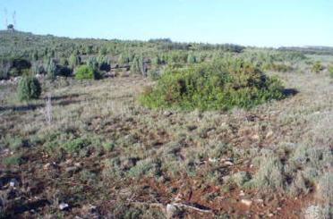Grundstücke zum verkauf in Argelita