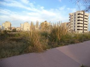 Venta Terreno Terreno Urbanizable piles- suelo finalista ** directo de banco sin comisiones *