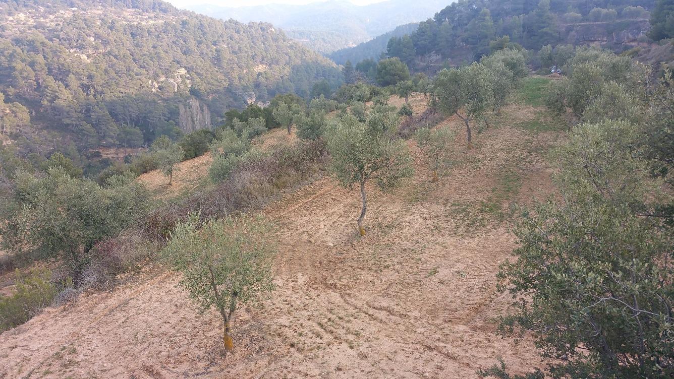 Solar urbà  Garrigues - la pobla de cérvoles