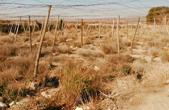 Suelo - Agrícola en Camino RONDA, MOREDA Y PLEITAS