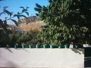 Finca rústica en Venta en Almería y Entorno - Benahadux / Benahadux