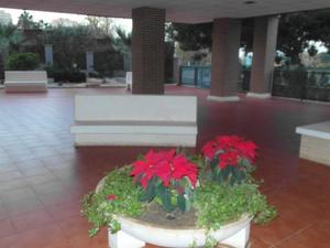 Alquiler Vivienda Piso cartagena ciudad - barrio de la concepción