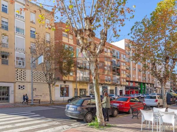 Plantas intermedias en venta en España