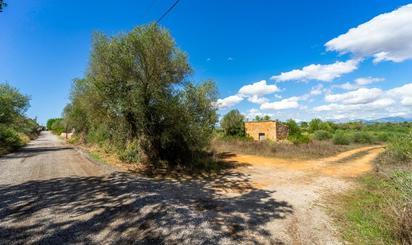 Bebaubares Gelände zum verkauf in Algaida
