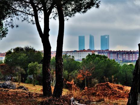 Fincas rústicas en venta en Madrid Capital