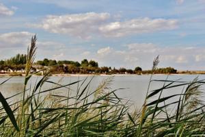 Finca rústica en Venta en La Mancha - Villafranca de Los Caballeros / Villafranca de los Caballeros