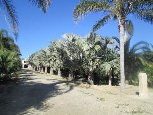 Finca rústica en Venta en Cullera - La Vega - Marenyet / El Faro - El Dossel