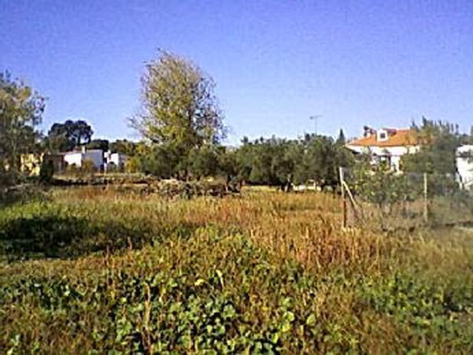 Foto 3 de Casa o chalet en Sanlúcar la Mayor