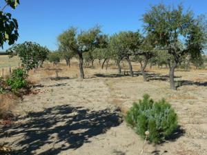 Terreno en Venta en Leganés, Zona de - Leganés / Valdepelayo - Montepinos - Arroyo Culebro