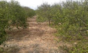 Terreno en Venta en Burriana / Borriana - Camino de Onda - Salesianos - Centro / Camino de Onda - Salesianos - Centro