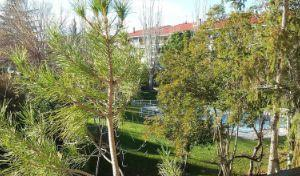 Piso en Alquiler en Collado Villalba - Parque de la Coruña - Las Suertes / Parque de la Coruña - Las Suertes
