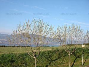 Casa adosada en Venta en Capital y Alrededores de Vizcaya - Getxo / Algorta