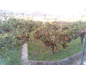 Finca rústica en Venta en Rioja / Rioja